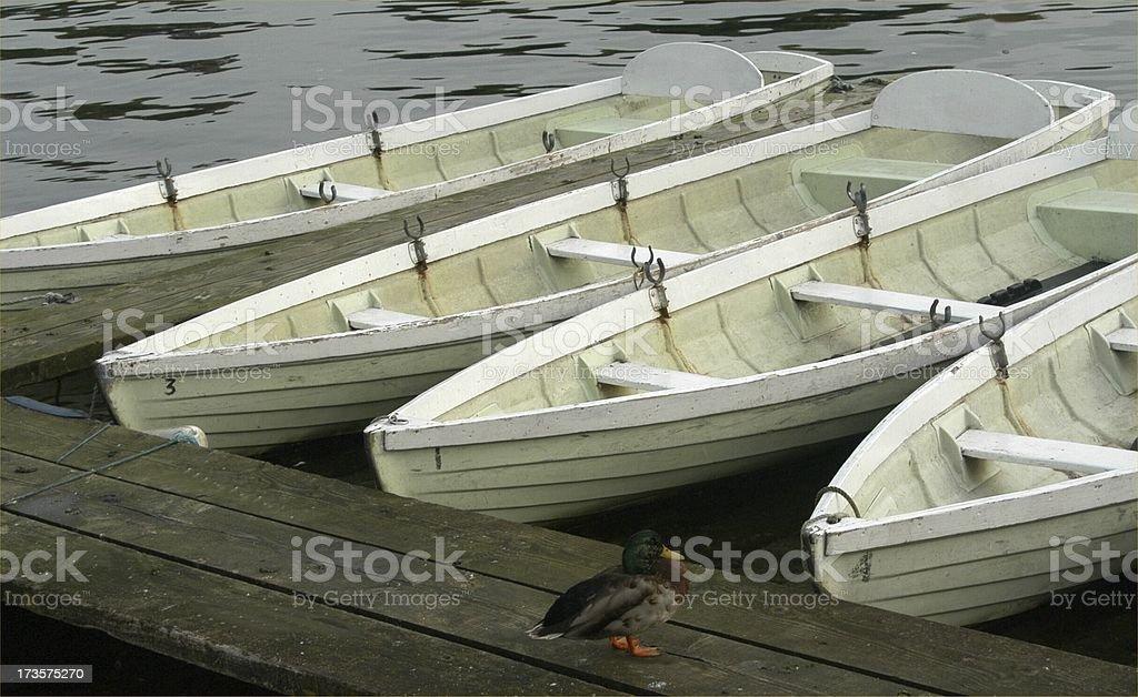 Duck Boats royalty-free stock photo