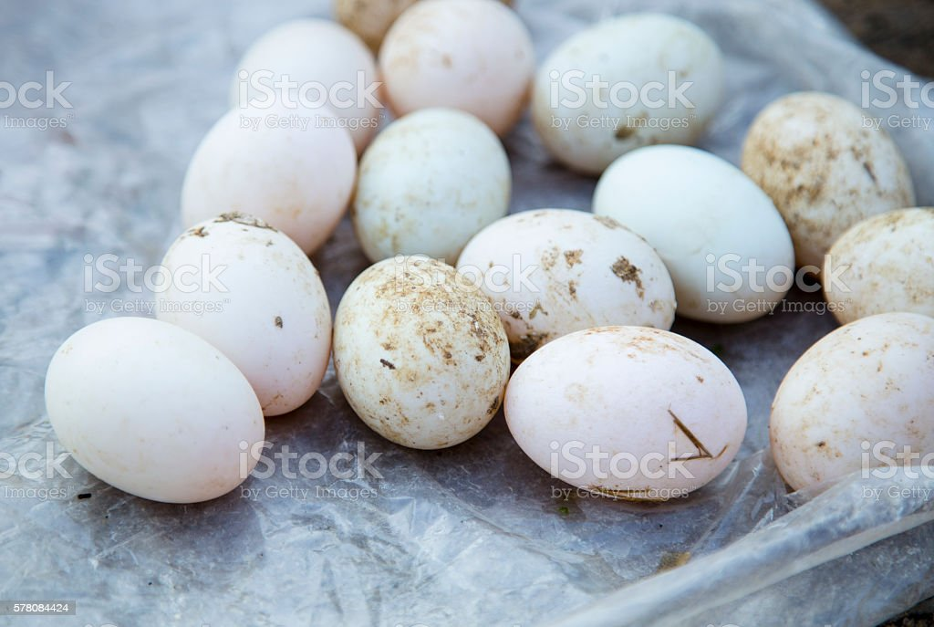 Duck eggs for sale stock photo