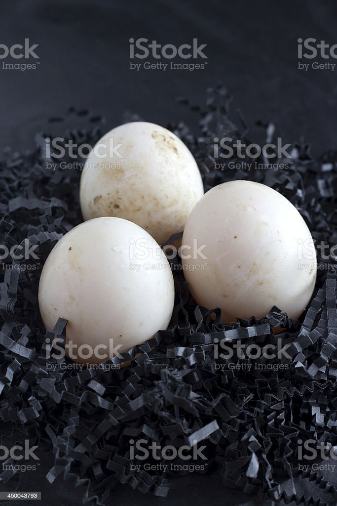 Duck eggs stock photo