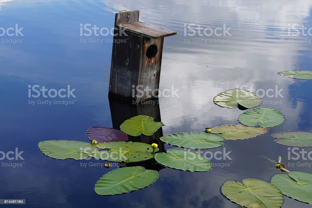 Duck House with reflection stock photo