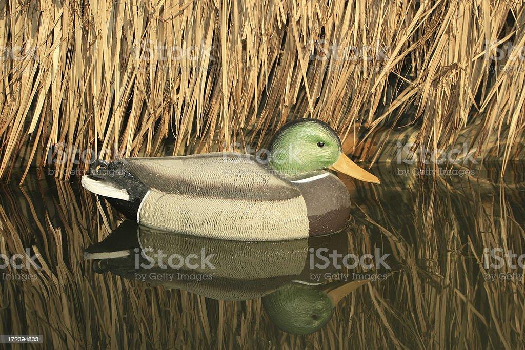 Duck Hunt Series stock photo