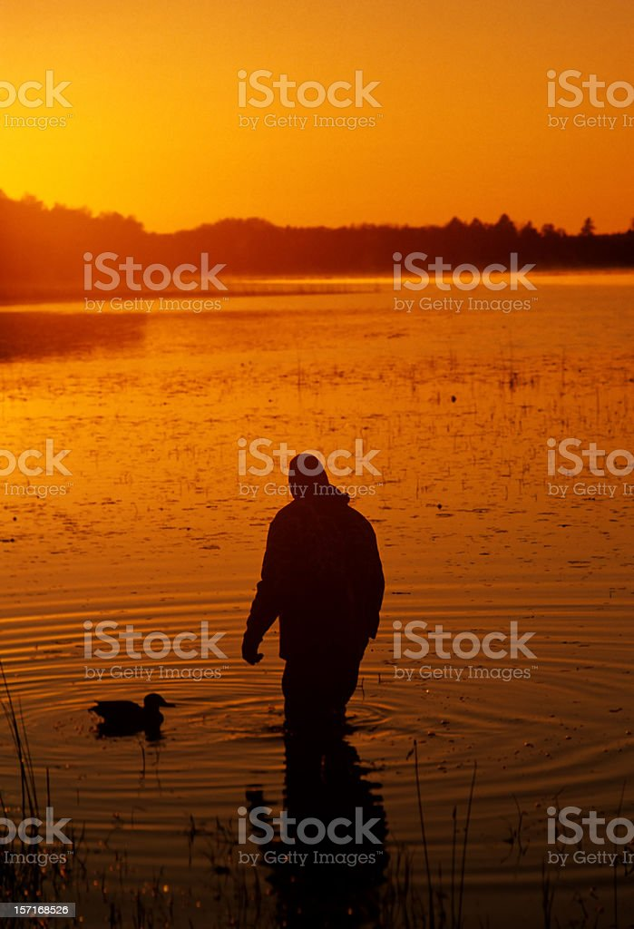 duck hunter and decoy stock photo