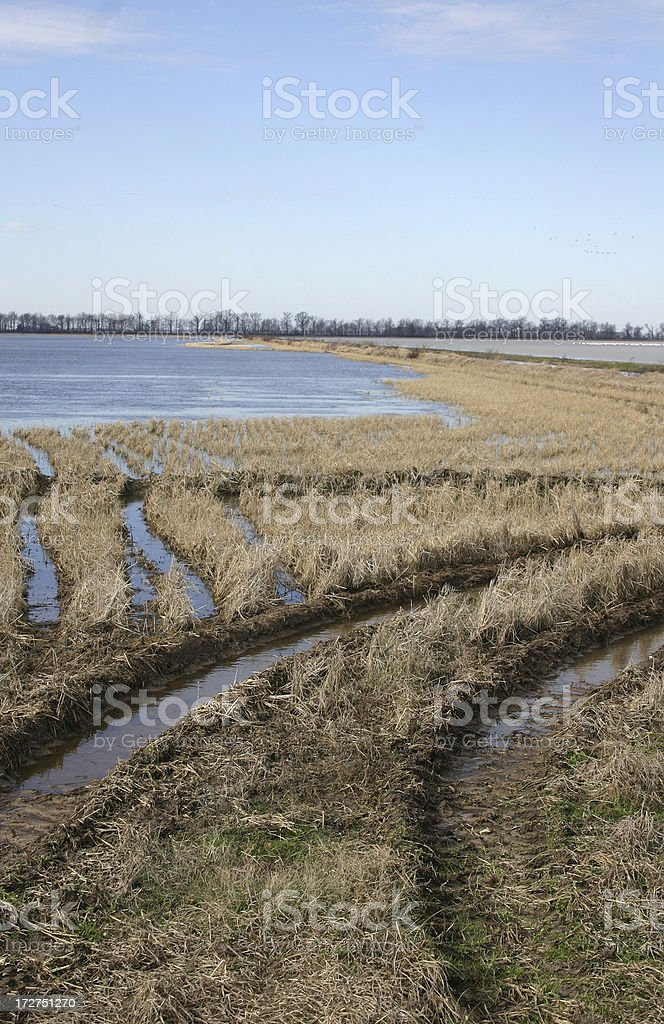 Duck Hunting Landscape royalty-free stock photo