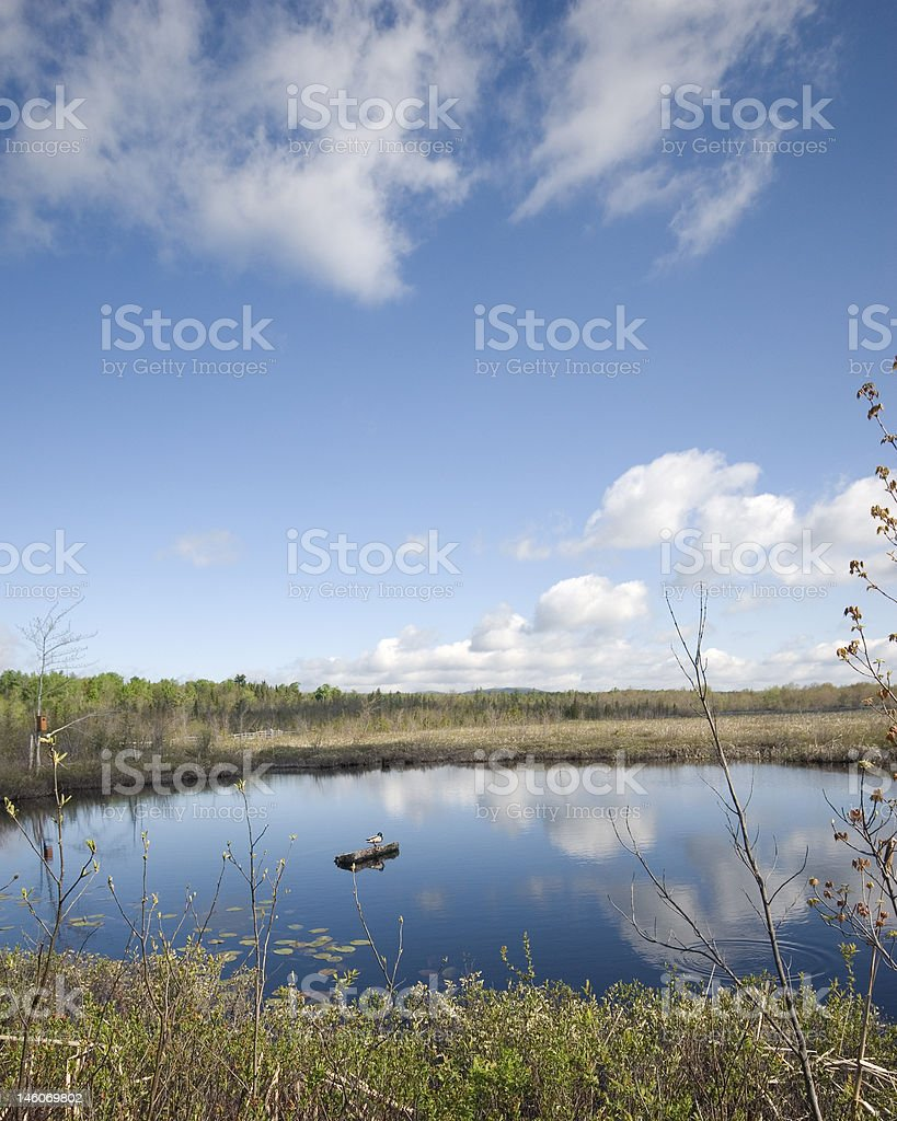 Duck Pond stock photo