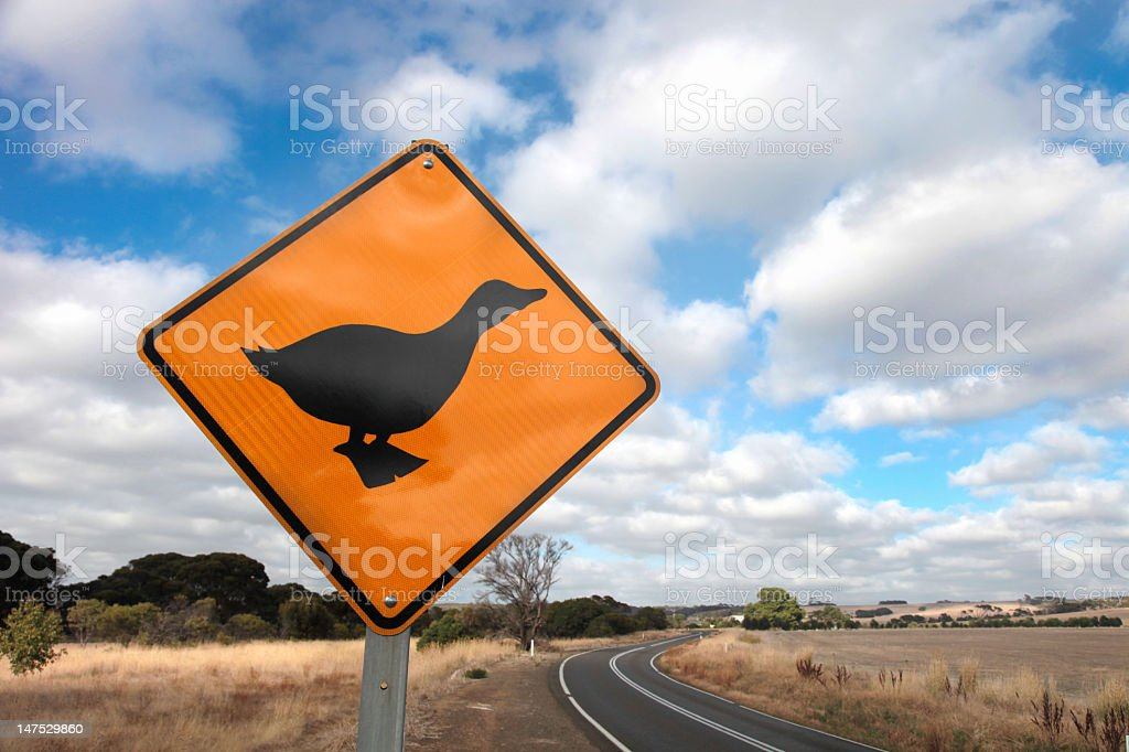 Duck Road Sign stock photo