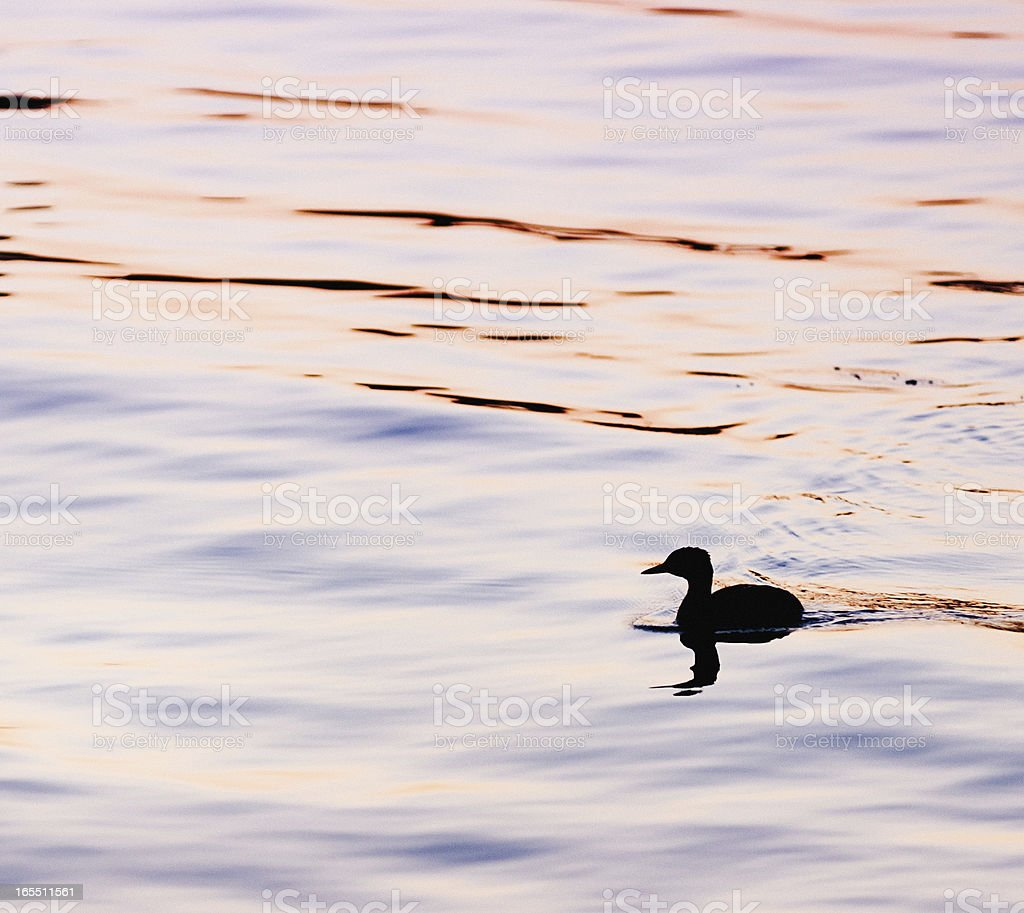 Duck Silhouette at Sunset stock photo
