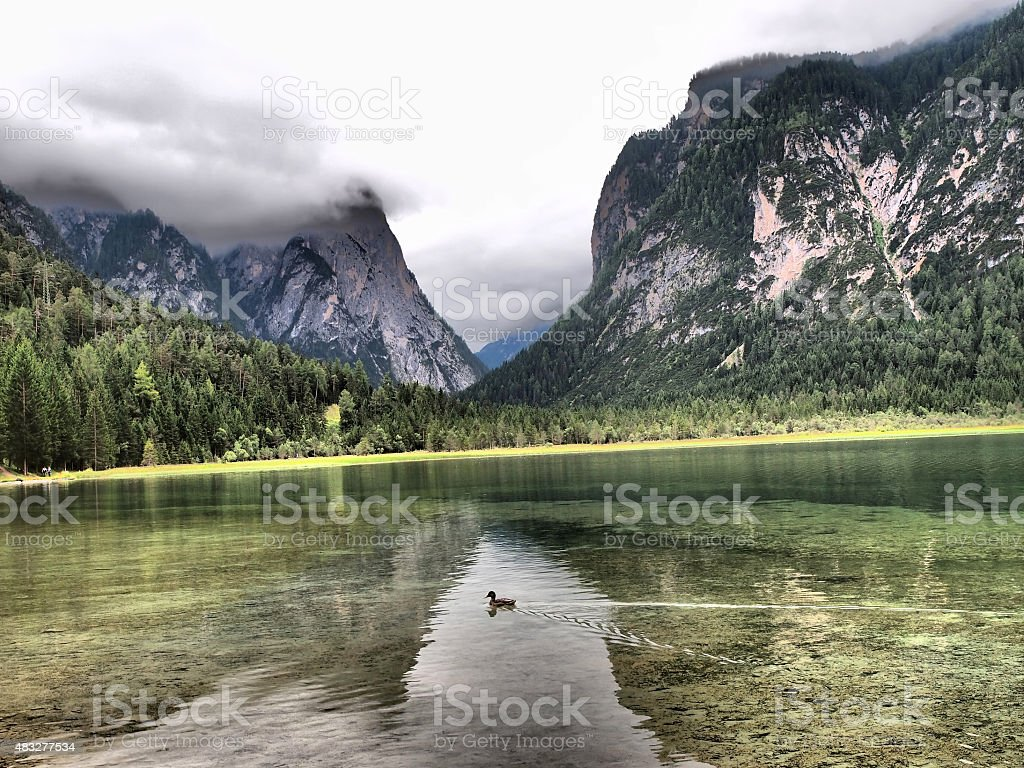 Duck swimming in between mountain reflections in Toblach Lake stock photo