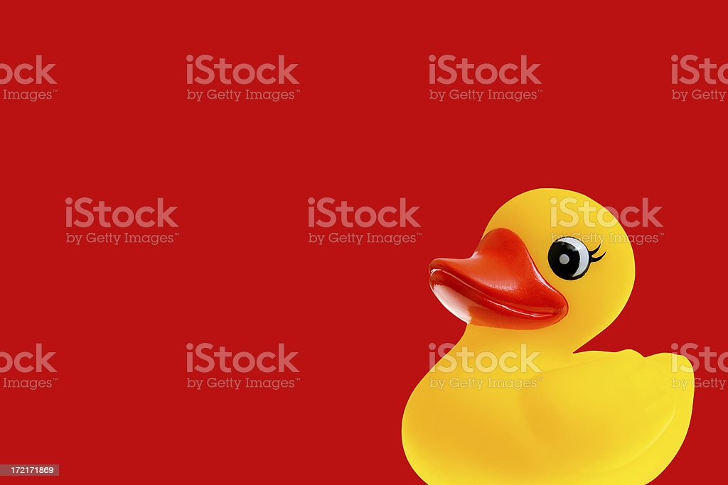 Duckie royalty-free stock photo