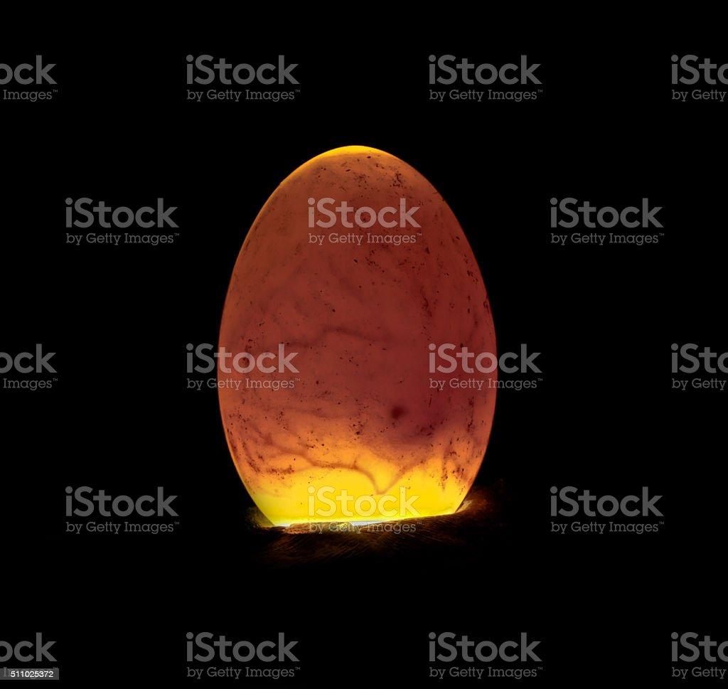 Duckling inside egg stock photo