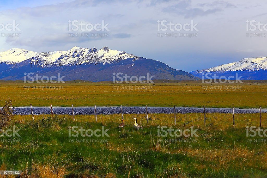 Ducks and livestock, Patagonia mountains, pampa steppe landscape, Calafate, Argentina stock photo