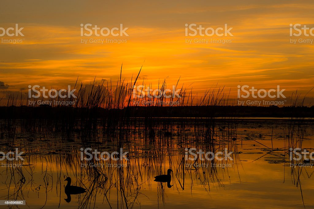 ducks au coucher du soleil photo libre de droits