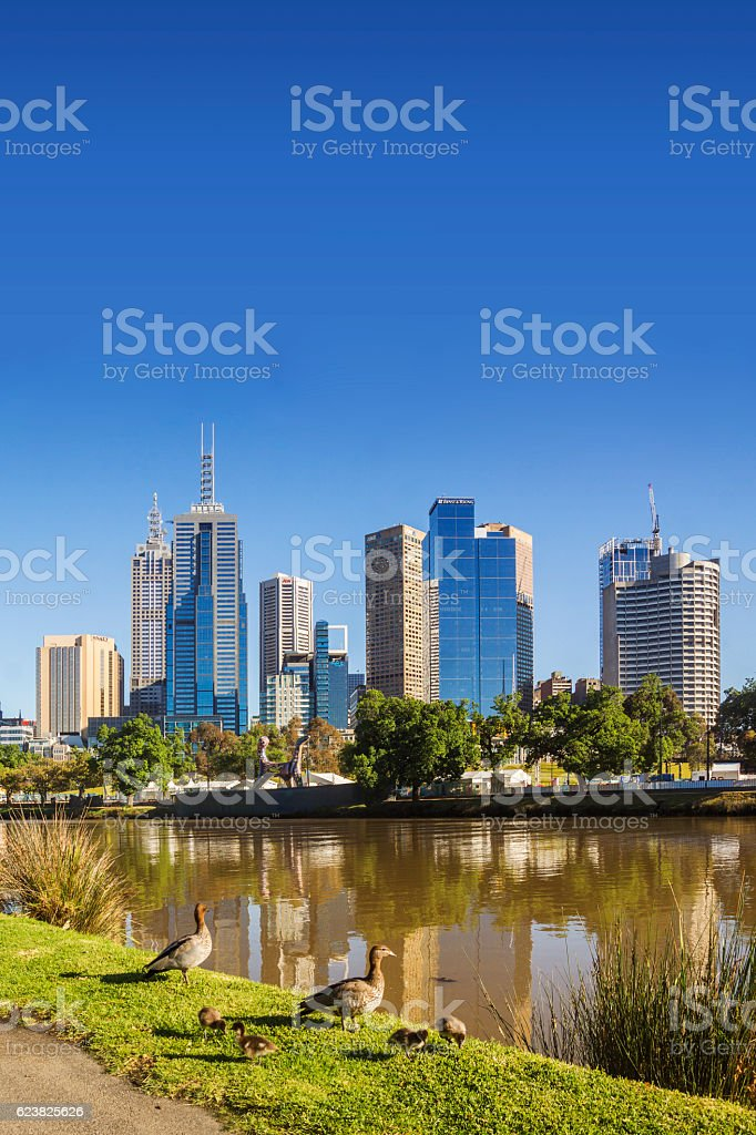 Ducks by Yarra River, Melbourne stock photo