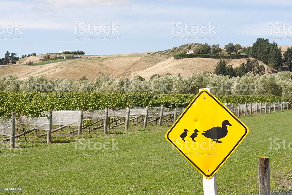 Ducks crossing stock photo