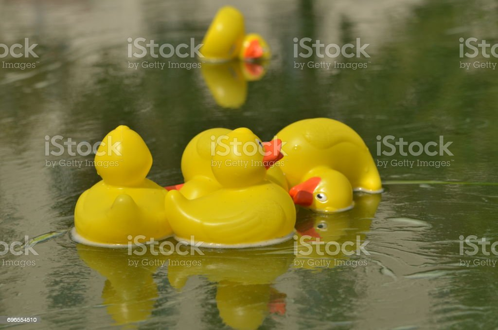 Ducks floating on water stock photo