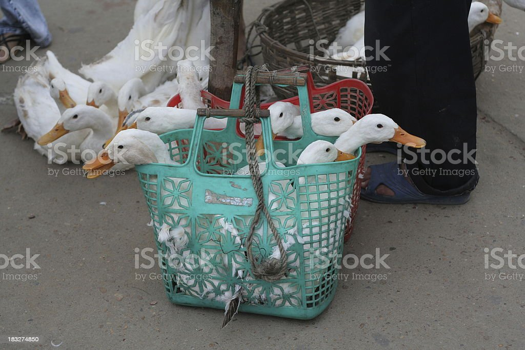 Ducks in a Basket stock photo