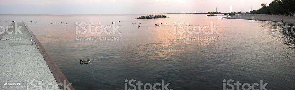 Ducks in a lake, Lake Ontario, Toronto, Ontario, Canada stock photo