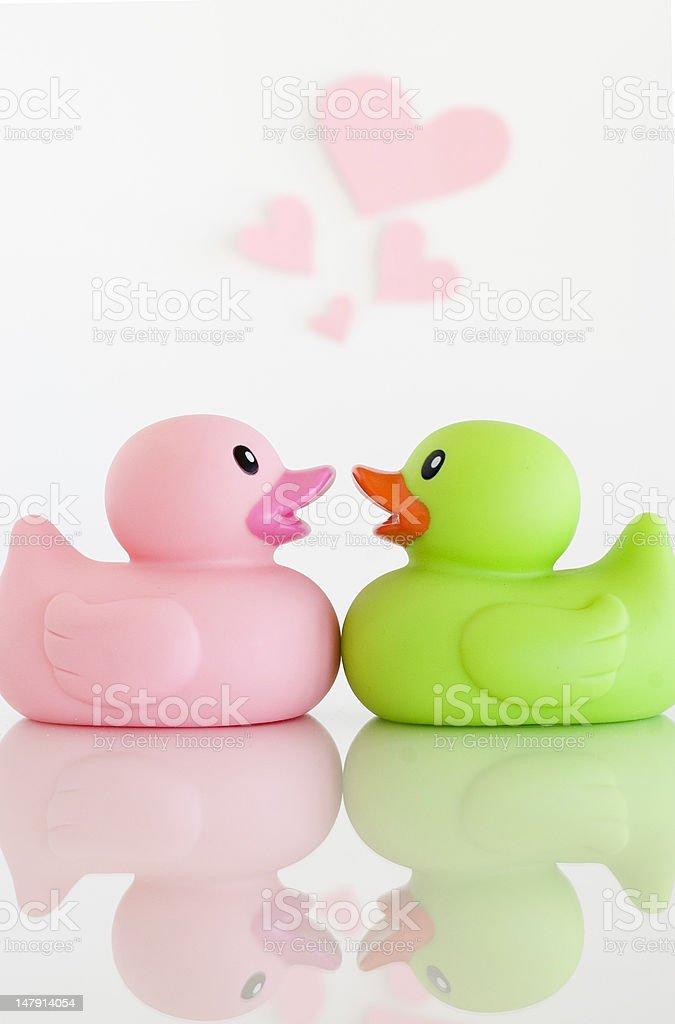 Ducks in Love stock photo