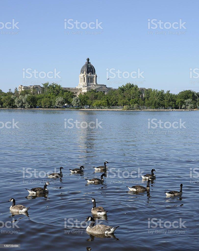 Ducks in the park,Regina. stock photo