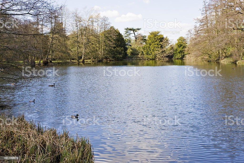 Ducks on a lake stock photo