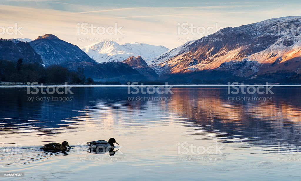 Ducks on Derwent Water lake stock photo