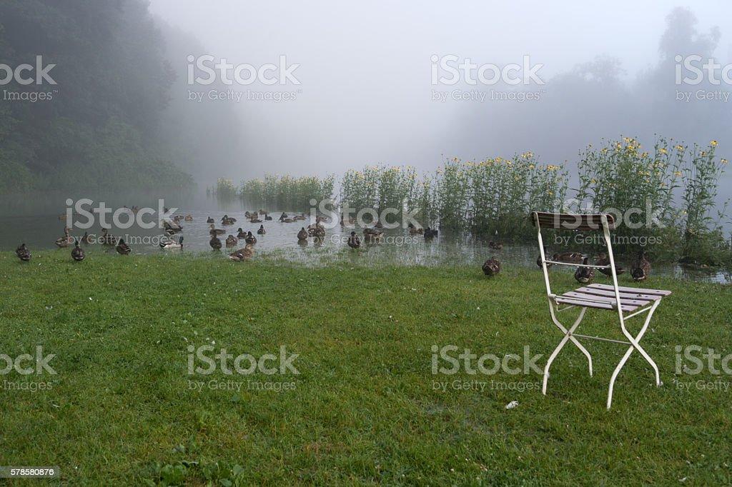 Ducks on the riverside stock photo