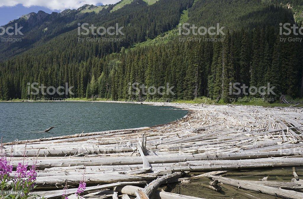 Duffey Lake and Cayoosh Creek with dead Trees royalty-free stock photo