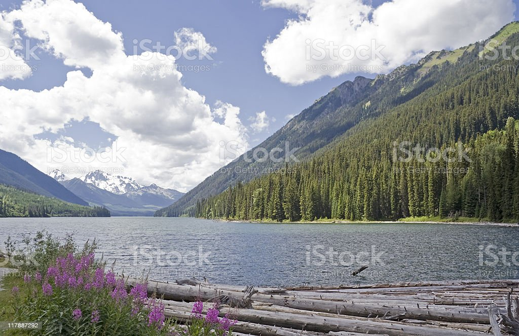 Duffey Lake and Cayoosh Creek with dead Trees royalty-free stock photo