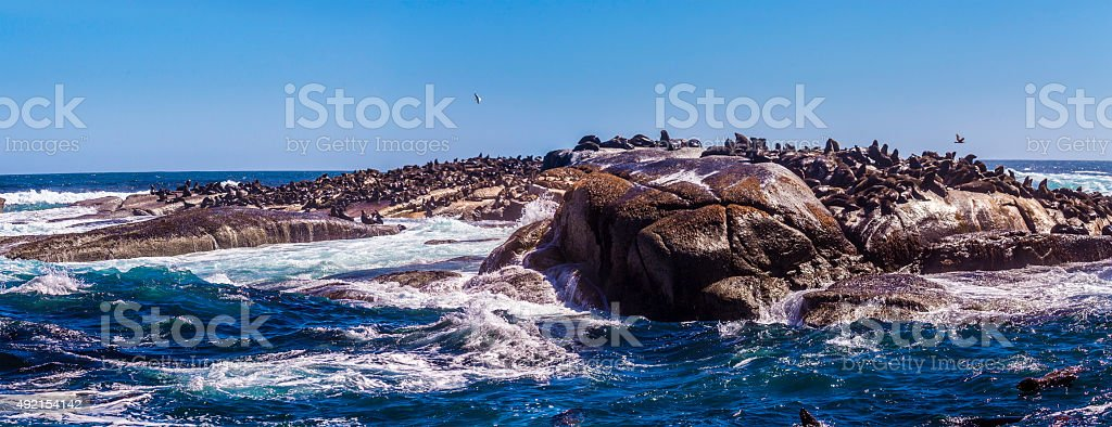 Duiker island in Cape Town stock photo