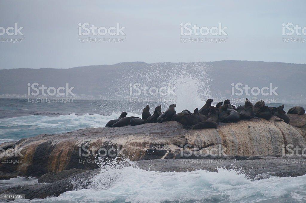 Duiker Island near Hout Bay, Cape Town. stock photo