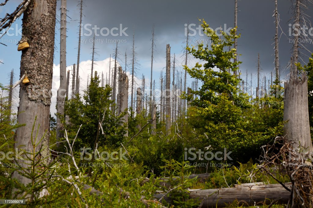 A dull dark image of Bavarian forest stock photo