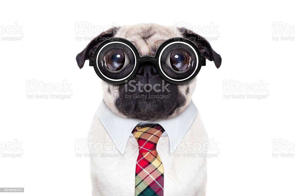 dumb crazy dog stock photo