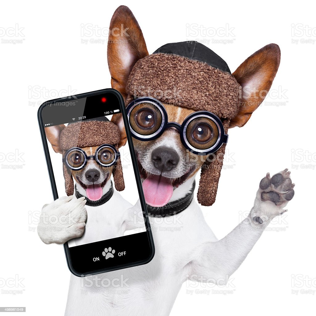 dumb crazy dog selfie stock photo