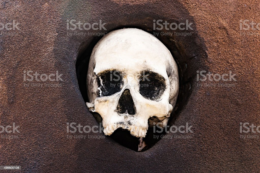 Dummy of a human skull stock photo