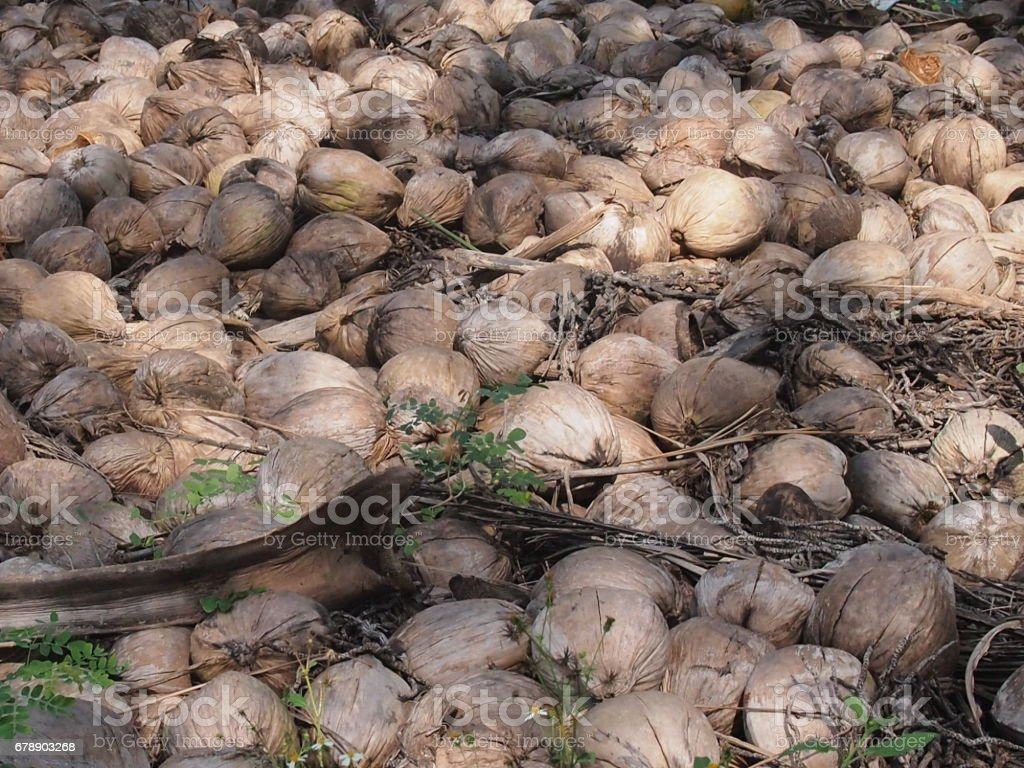 Dump of coconuts stock photo