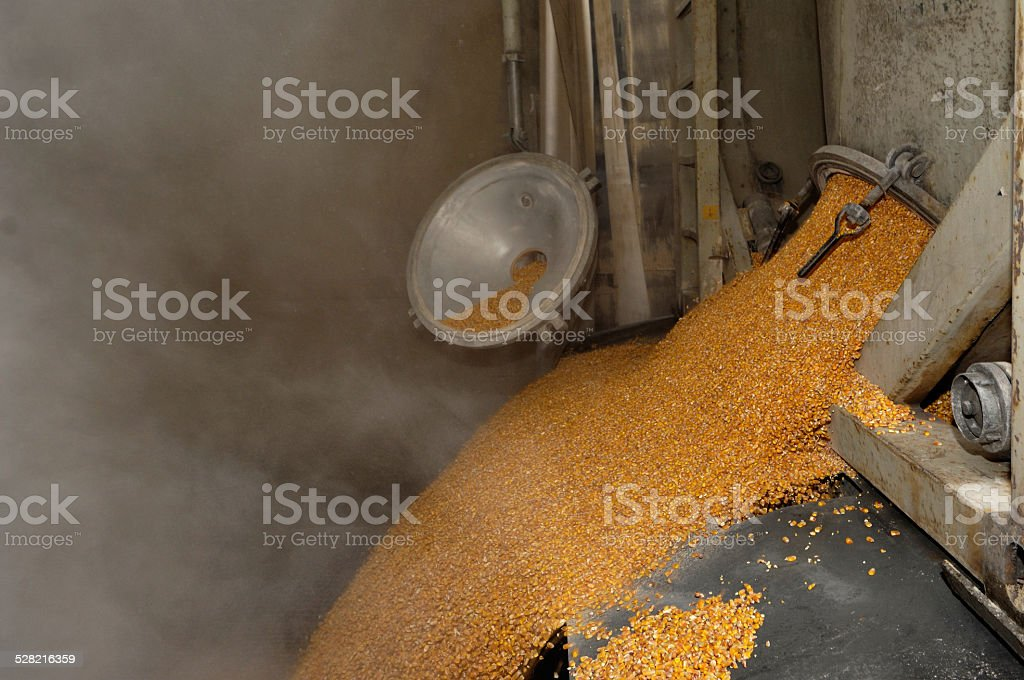 Dumping of wheat grains stock photo