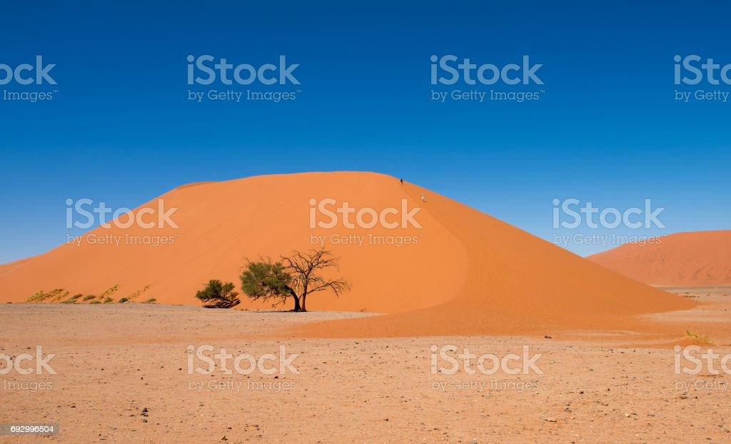 Dune 45, Sossusvlei, Namib-Naukluft National Park, Namibia stock photo