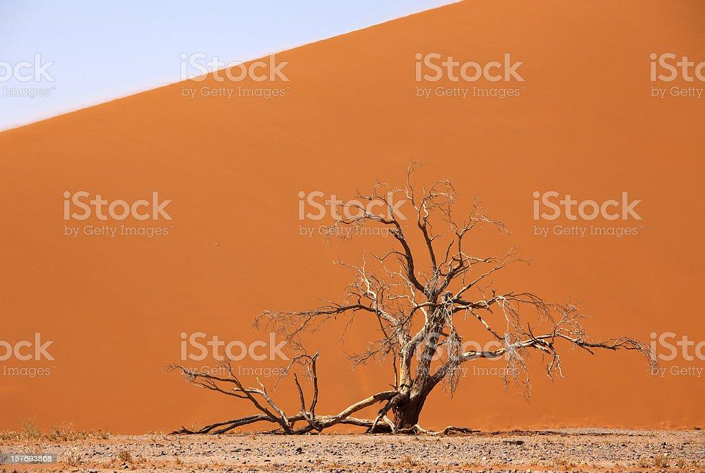 Dune 45 with tree at Sossusvlei, Namibia stock photo
