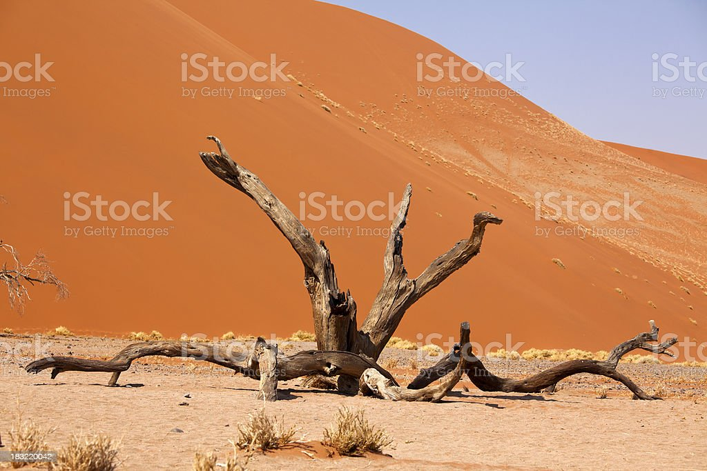 Dune 45 with tree at Sossusvlei, Namibia stock photo