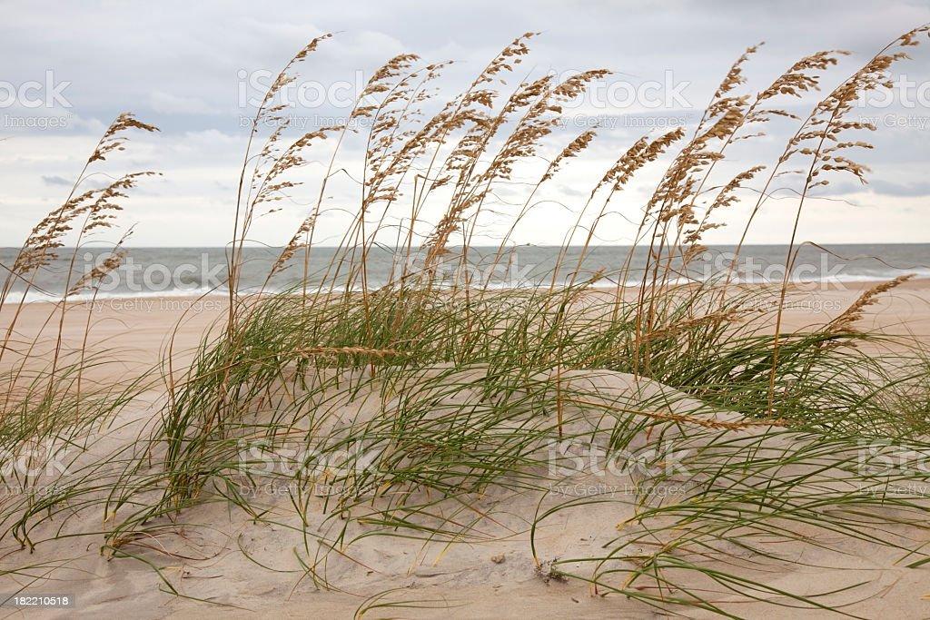 Dune and Ocean stock photo
