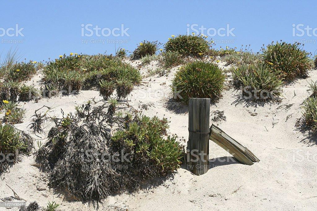 Dune conservation stock photo