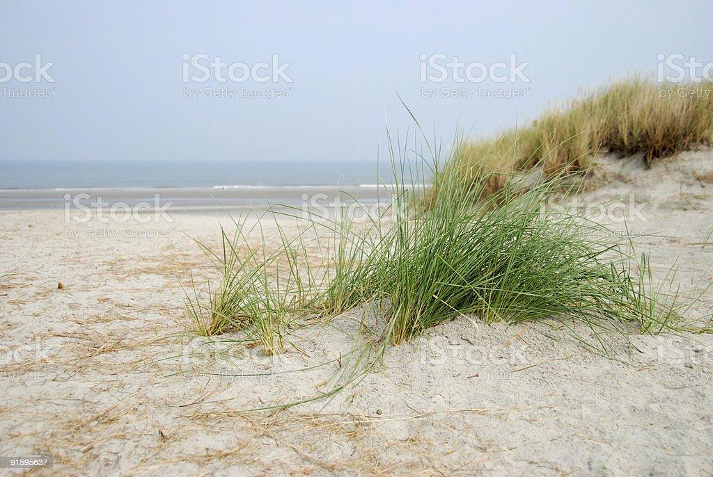 Dune herbe à la plage par Ameland photo libre de droits