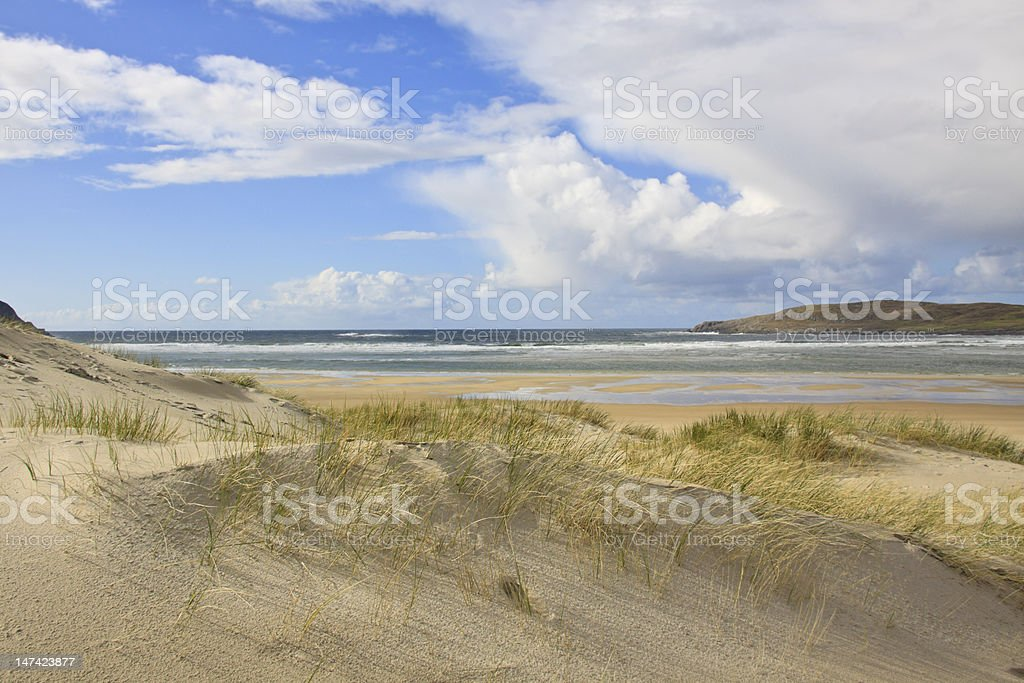 Dune grass at the beach stock photo