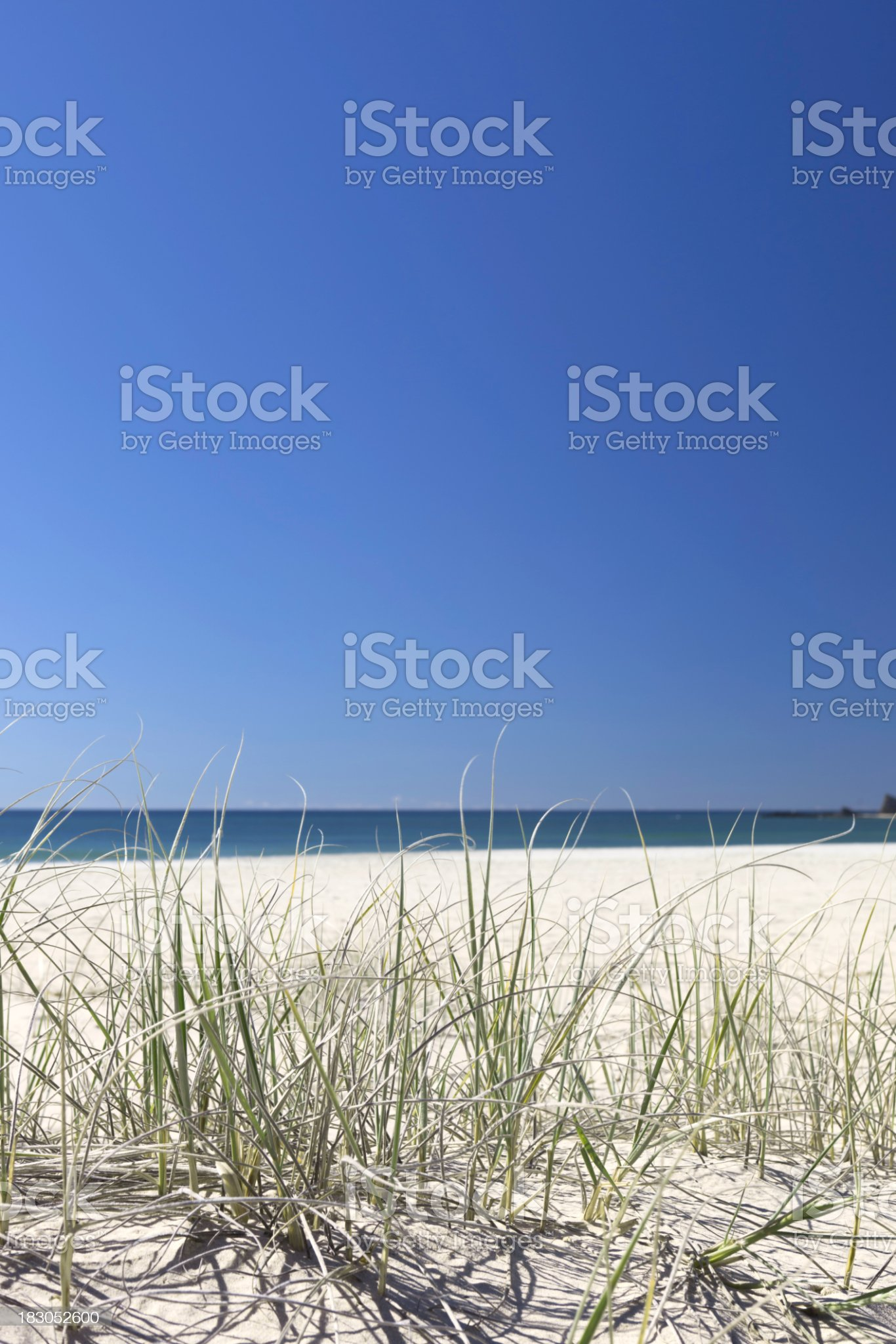 Dune grass on beach royalty-free stock photo