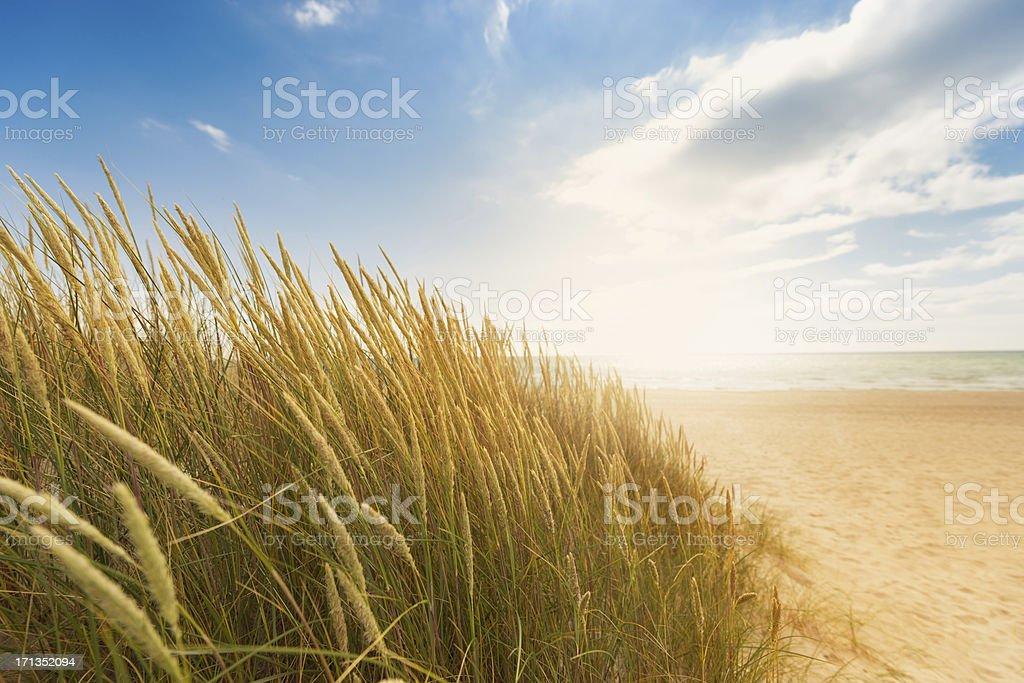 Dune grass on the beach stock photo