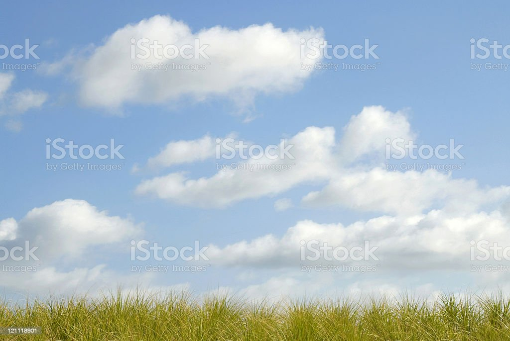 Dune Grass royalty-free stock photo