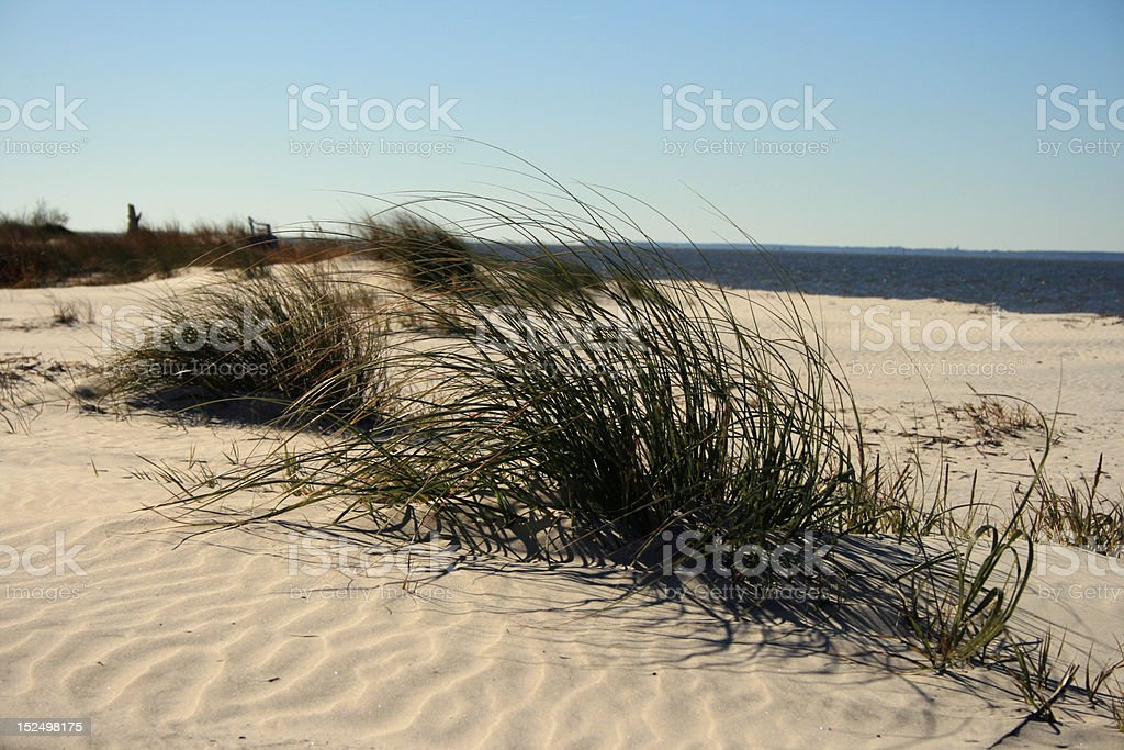 Dune Grass royalty-free stock photo