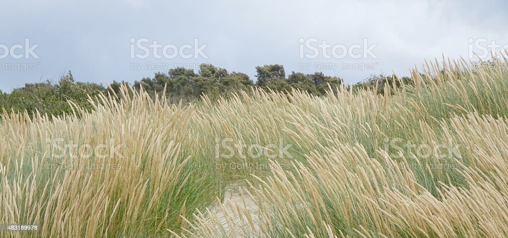 dune in the wind stock photo