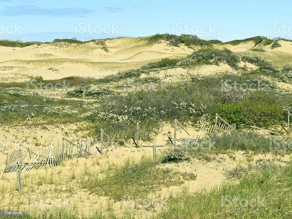 Dune landscape, Cape Cod National Seashore royalty-free stock photo