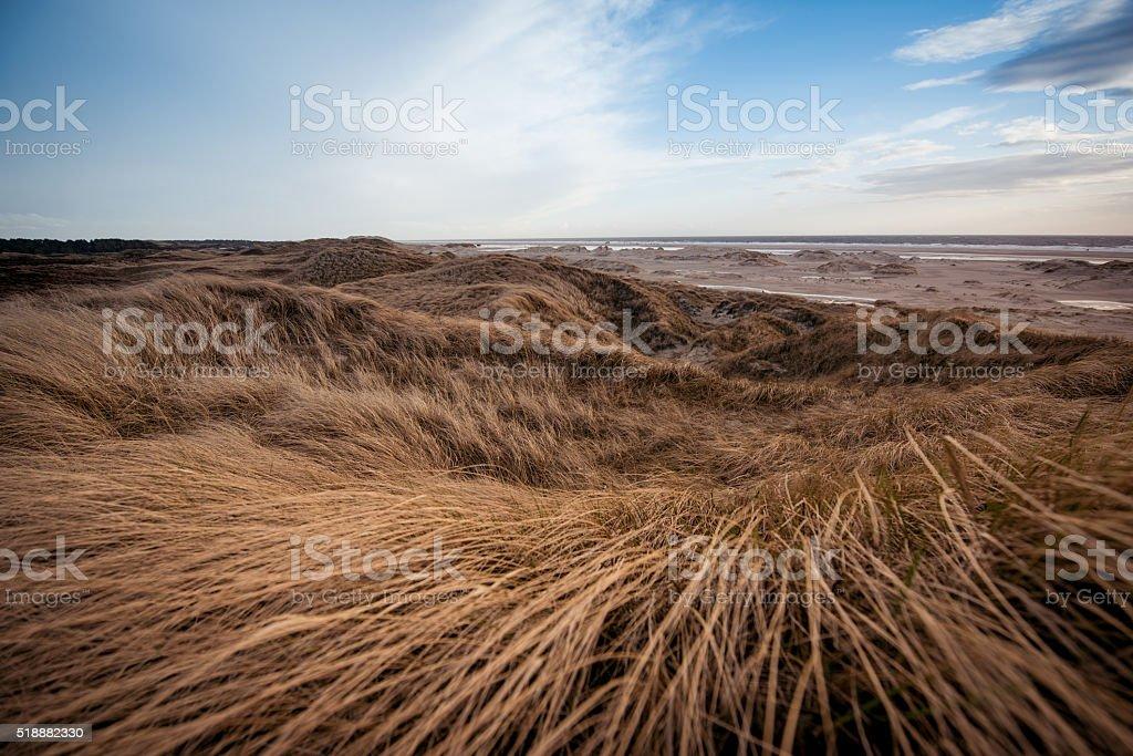 Dune landscape stock photo