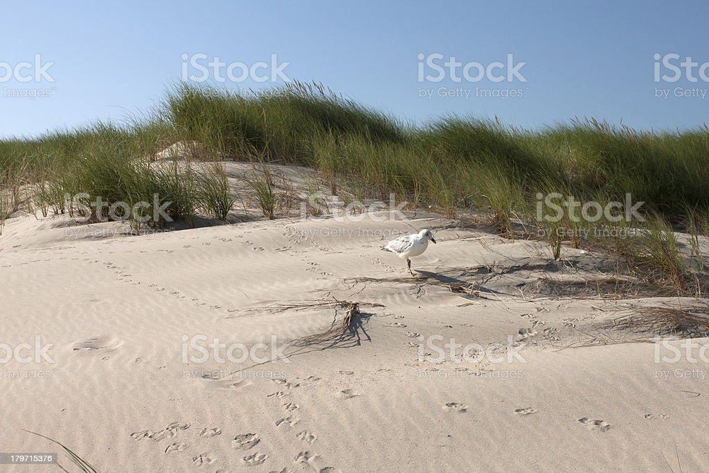 Dune Landschaft mit Möwe Lizenzfreies stock-foto